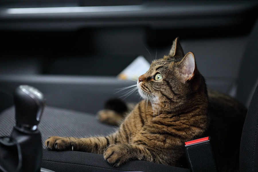 Ways To Stop A Cat From Meowing In The Car That Actually Work