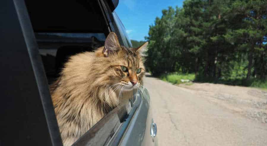 How To Prevent Motion Sickness In Cats